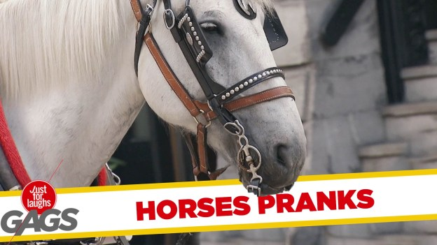 Best Horse Pranks – Just For Laughs Gags