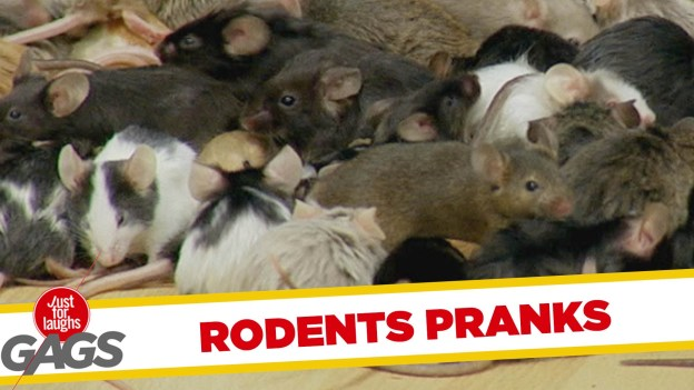 Best Rodents Pranks – Just for Laughs Gags