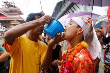 gai-jatra-festival-kathmandu-2069-33