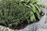 Εκπληκτική Diy γλάστρα για βότανα από κοτετσόσυρμα