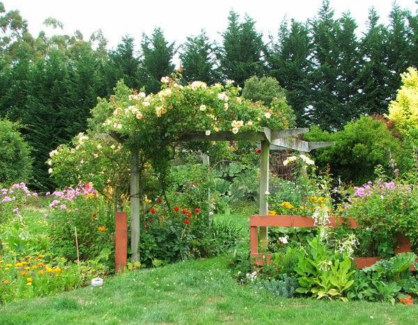 φυτά για πέργκολες1