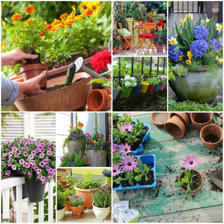 μπαλκόνι-φυτά-λουλούδια