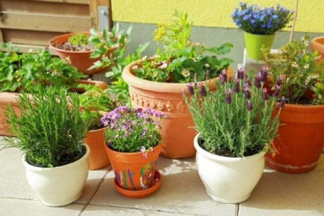 μπαλκόνι-φυτά-λουλούδια23