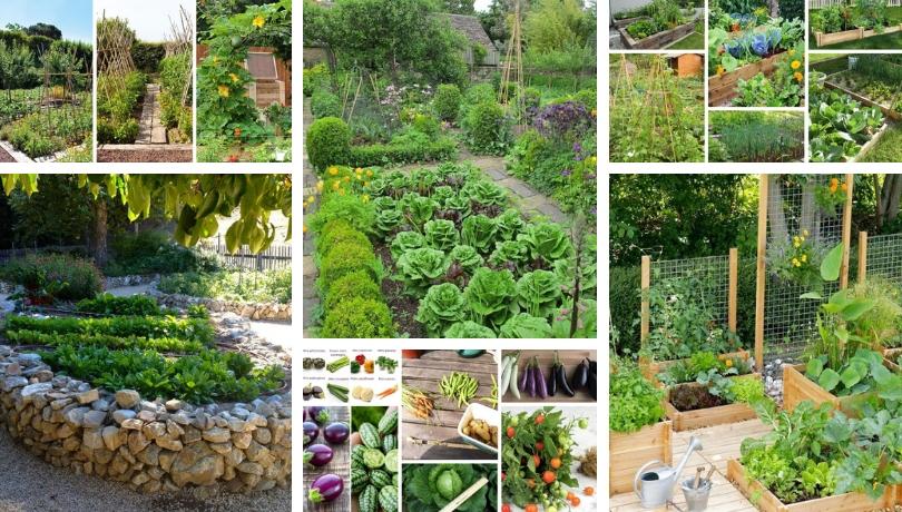 Συμβουλές και μυστικά για να κάνετε τον πιο επιτυχημένο λαχανόκηπο