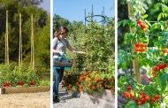 Οι 34 καλύτερες ιδέες στήριξης ντομάτας για καλύτερη απόδοση