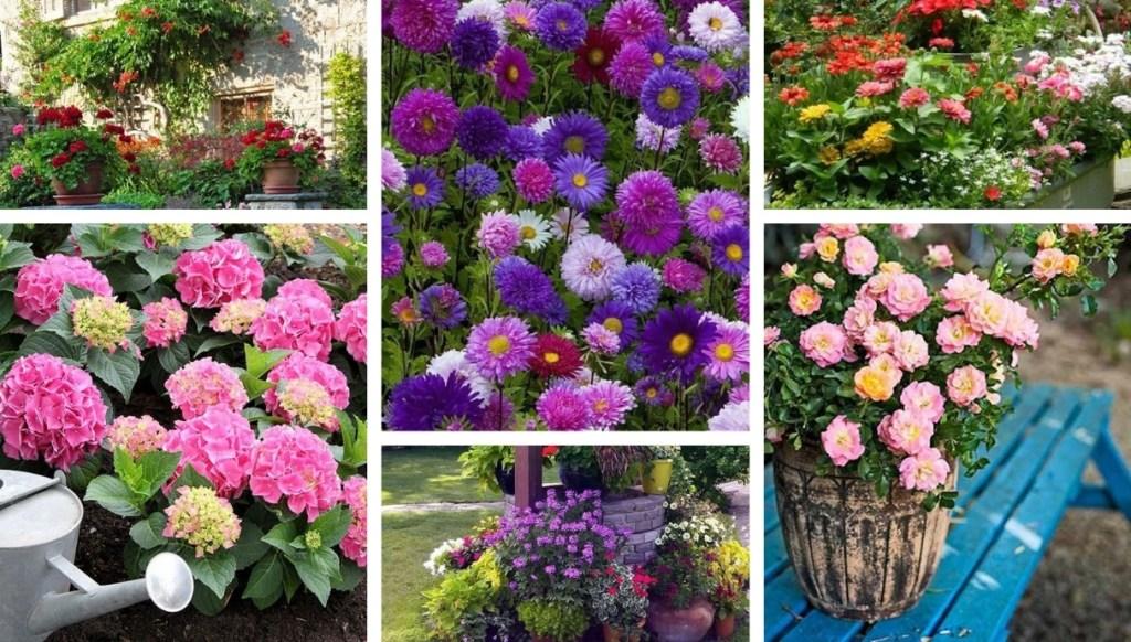 34 Όμορφες ιδέες για να διακοσμήσετε την αυλή ή τον κήπο σας με πολύχρωμα, εντυπωσιακά λουλούδια