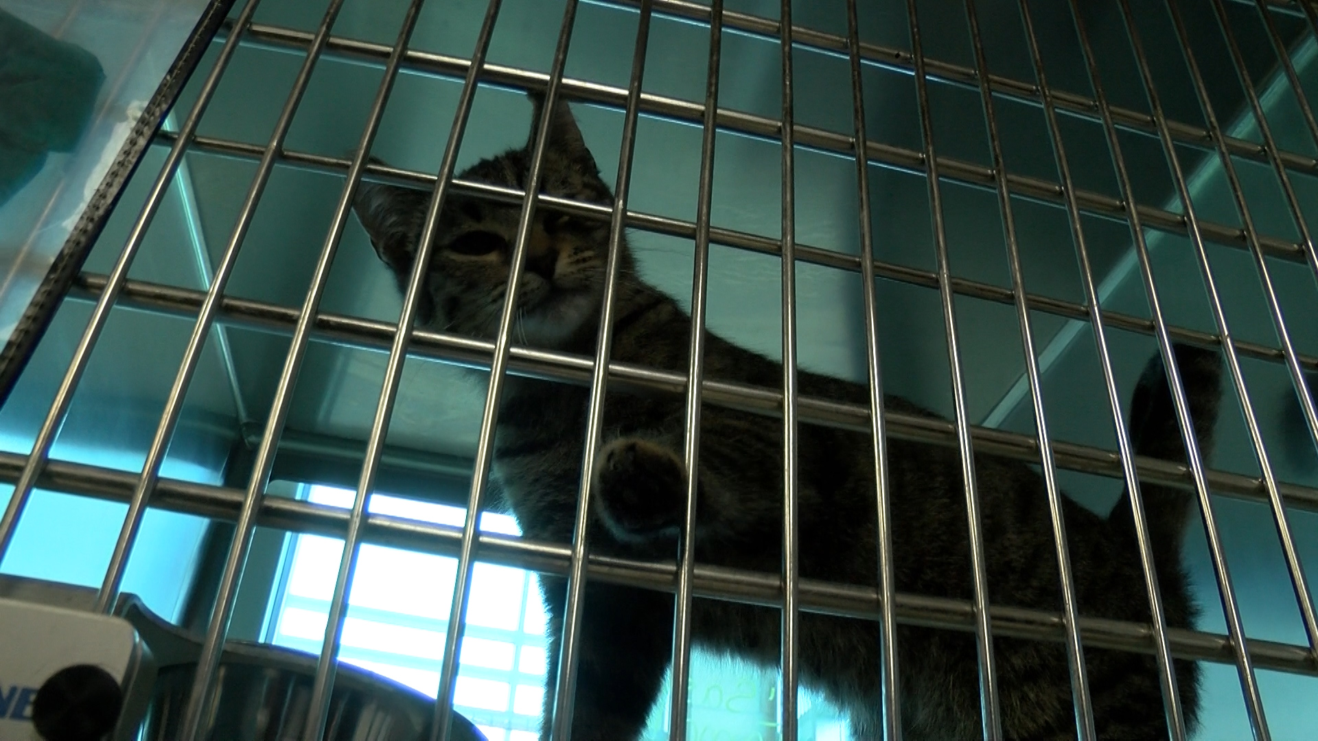 Clear the Shelters_1534627947138.jpg.jpg