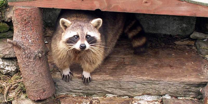 Wild Animals and Your Home's Foundation