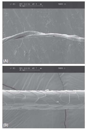 Typical low-magnification SEM images of (A) cotton and (B) wool.