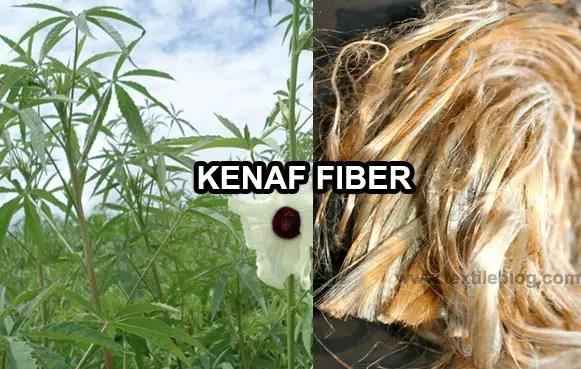 kenaf plant and fiber