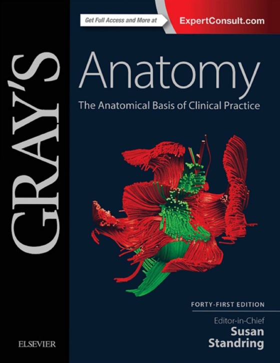 Gray's Anatomy_ The Anatomical Basis of Clinical Practice