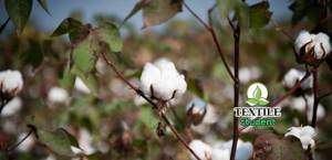 Complete Dyeing process of cotton