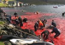 matanza delfines islas feroe