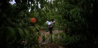 empleos sector agrícola