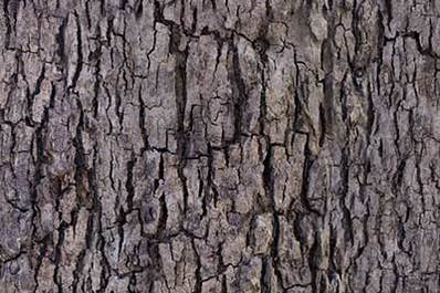 Image result for tree bark