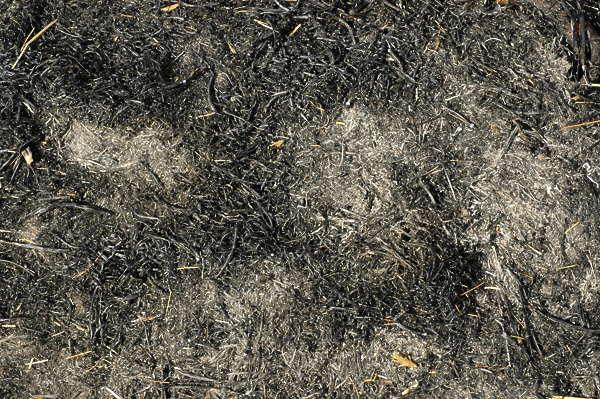 grassdead0039 free background texture