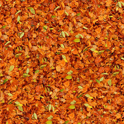 LeavesDead0033  Free Background Texture  leaves floor