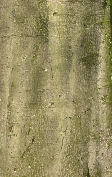 Barkdecidious0048 Free Background Texture Wood Bark