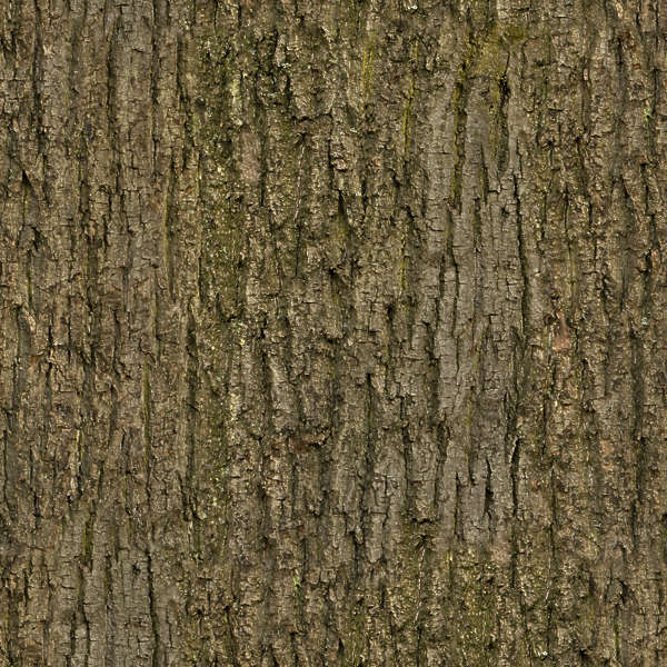 BarkDecidious0164  Free Background Texture  wood bark