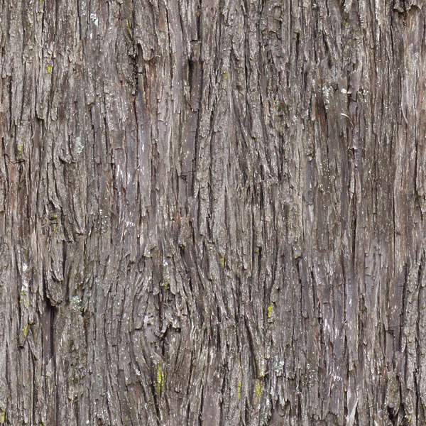 Tiles Wallpaper Hd Barkpine0009 Free Background Texture Wood Bark Pine