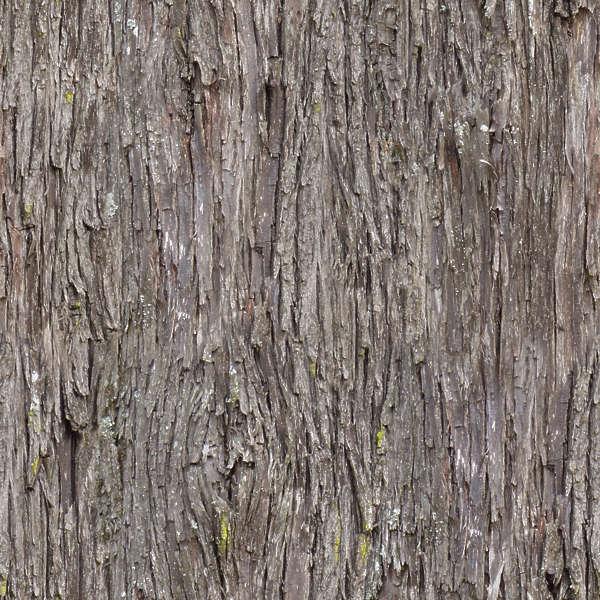 3d Graphic Wallpaper Hd Barkpine0009 Free Background Texture Wood Bark Pine