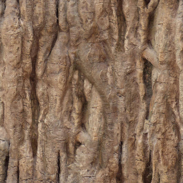 BarkTropical0001  Free Background Texture  wood bark