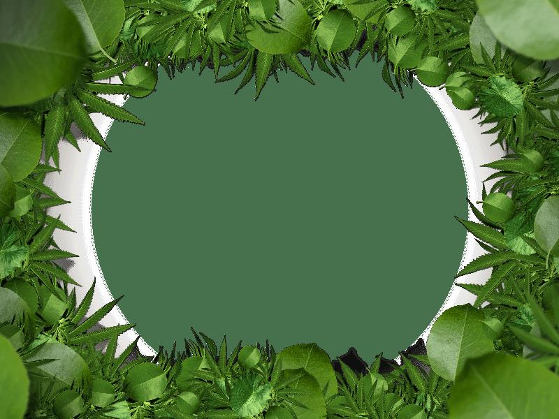 nature green leaf border