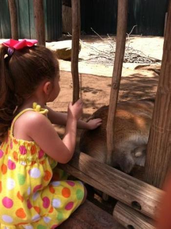 Busch Gardens Free Frugal Homeschool Field Trip