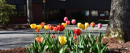 Tulips at TFMoran-Bedford