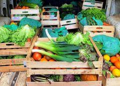 La stagione agrumaria registra risultati senza precedenti, adesso via alla frutta estiva