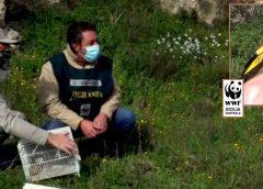 Le guardie ambientali WWF liberano cardellini sequestrati dalla polizia a Caltanissetta