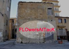 Flowers attack al quartiere San Francesco