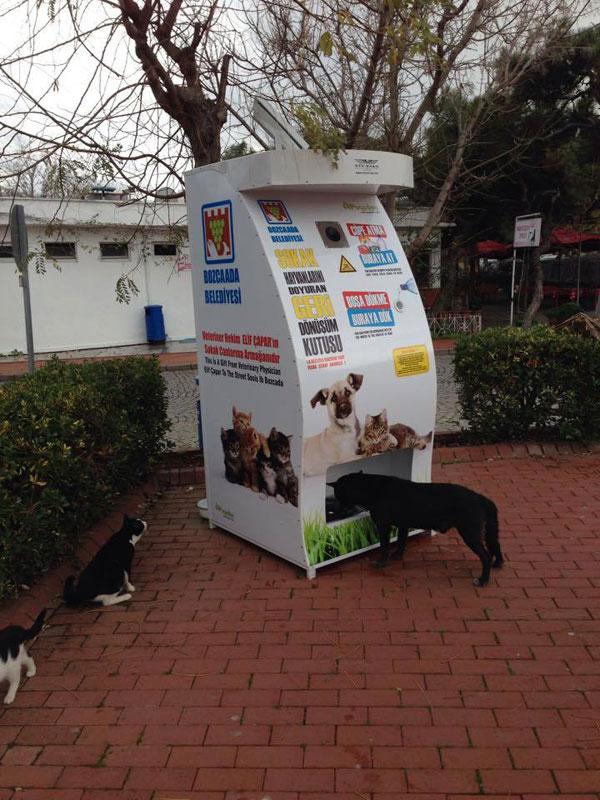I Meravigliosi Cani Di Istanbul Viaggiovagando