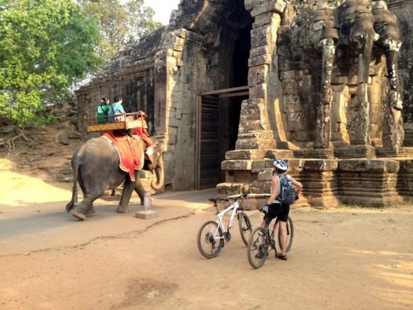 Yield Elephants