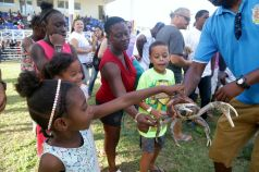 Children and visitors got to touch and look at the crabs close up before the crab race.