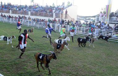 Jockeys race behind their goats during the Festival.