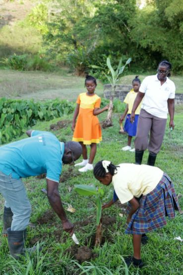 """Mason Hall Y-Zone Police Youth club member Lynell Covey, right foreground, puts a plantain sucker in the earth under the guidance of Tobago Agricultural Society president Micheson Neptune, left, as TAS vice president Olive James, and other """"Y-Zoners"""" looks on."""