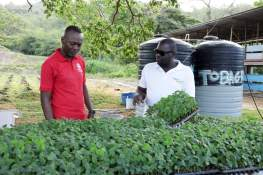 Ricardo Alfred, owner and manager of Tobagrow, shows Chief Secretary Ancil Dennis his crops during his tour. Alfred's crops include cucumbers and lettuce.