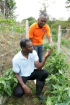 Chief Secretary Hon. Ancil Dennis is handed a sweet pepper by KIG Agro Production Limited's Operations Manager Vernon Griffith.