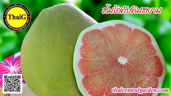 ผล พันธุ์ส้มโอทับทิมสยาม หรือ ส้มโอแดงสยาม