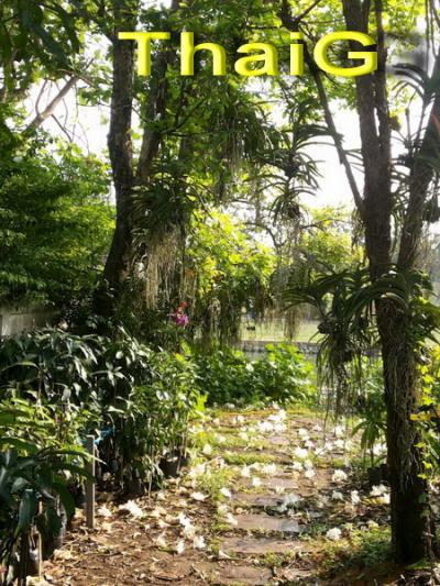 ต้นแคนา ไม้ดอกสีขาว กลิ่นหอมเป็นไม้ป่า