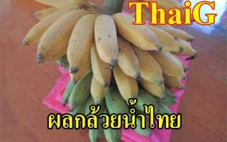 กล้วยน้ำไทย กล้วย อายุวัฒนะ