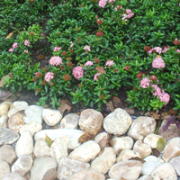 Thai Rock Gardens - Thai Garden Design