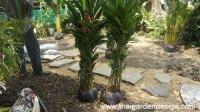 Shade Planting for a Tropical Rock Garden - Thai Garden Design