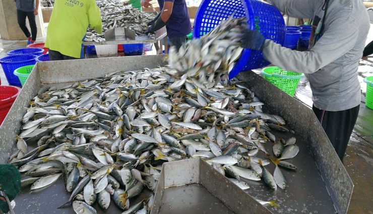 Poor labour conditions and human rights abuses, both on fishing vessels and in processing plants, are notorious