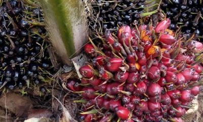 PM satisfied with higher palm pricing after gov't measures