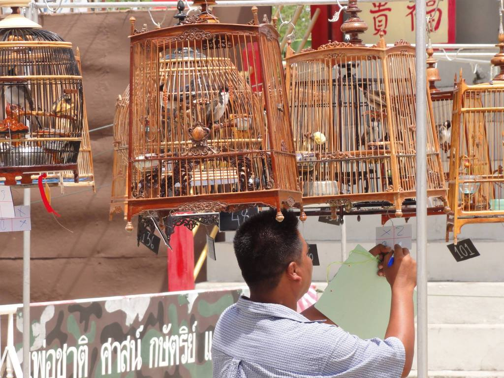Pattani bird chirping competition