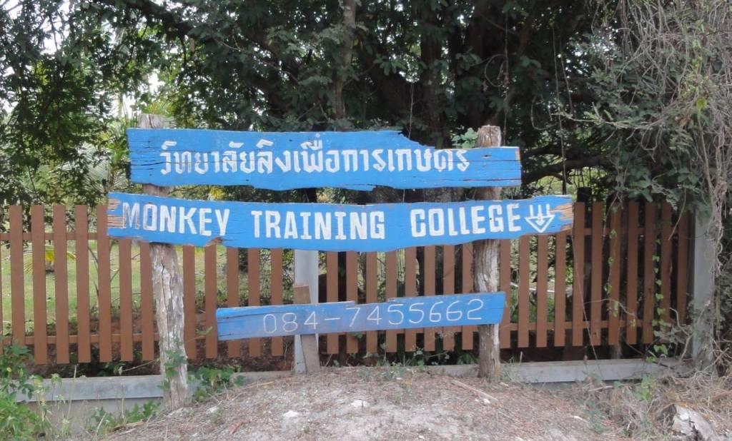 surat thani monkey training college