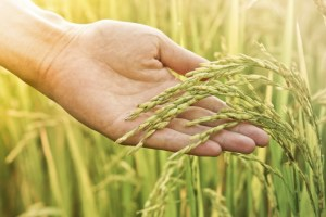 China says grain subsidies abide by WTO rules
