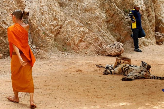 WWF applauds govt's removal of Tigers from Temple